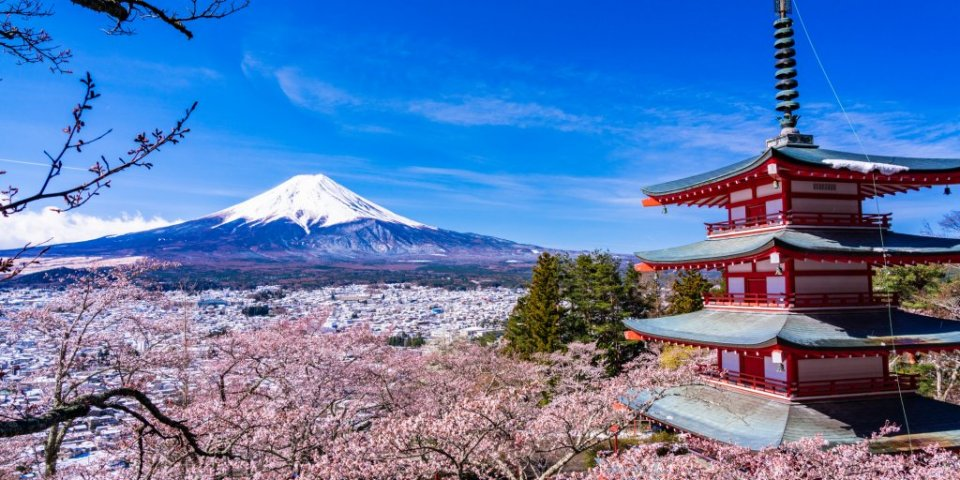 Spring Only! Voracious Course to See the Cherry Blossoms in Fujiyoshida