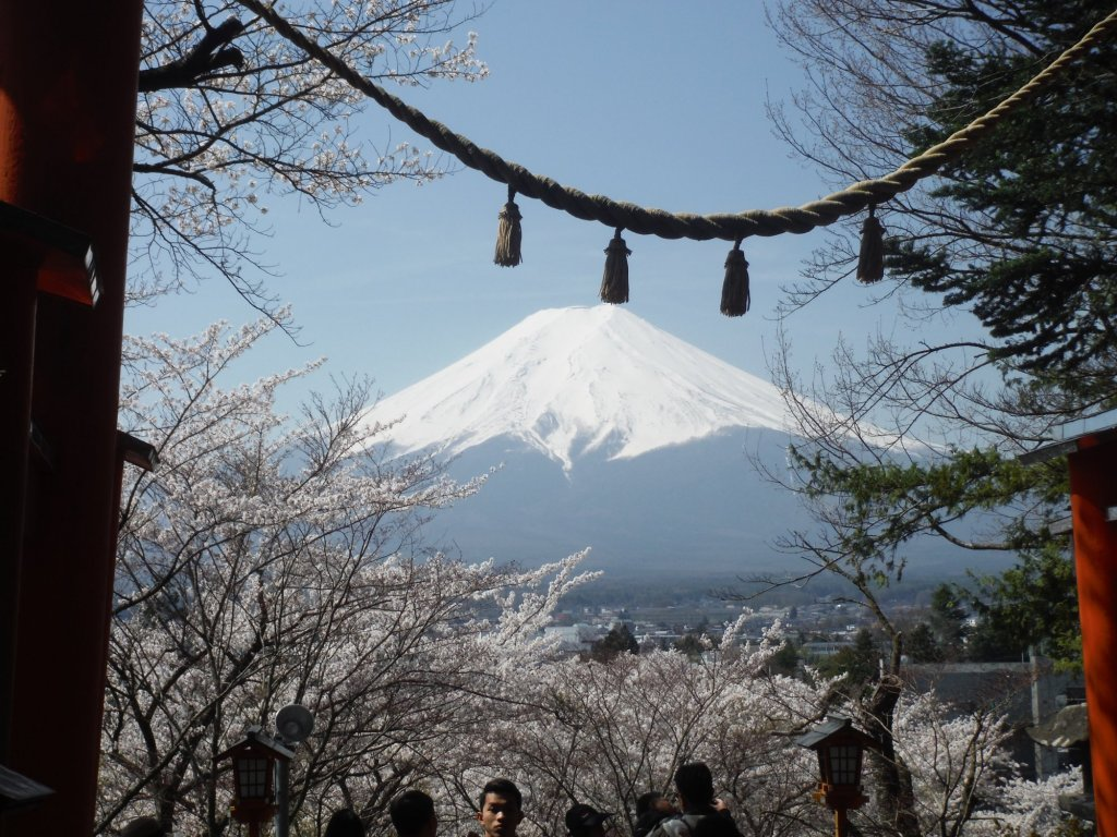 Voracious Course to See the Cherry Blossoms in Fujiyoshida